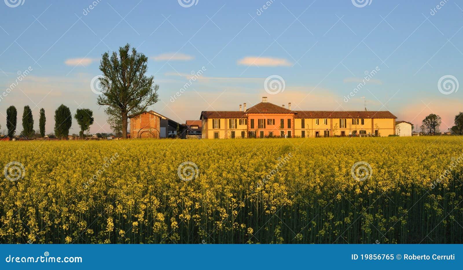Brassic budynku cascina śródpolna musztarda wiejska