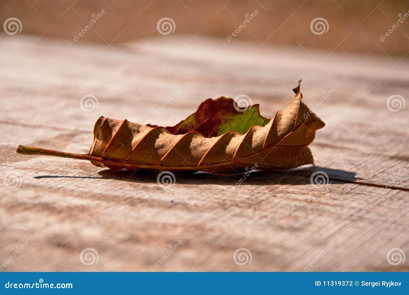 Braunes Blatt des Herbstes einer Eiche