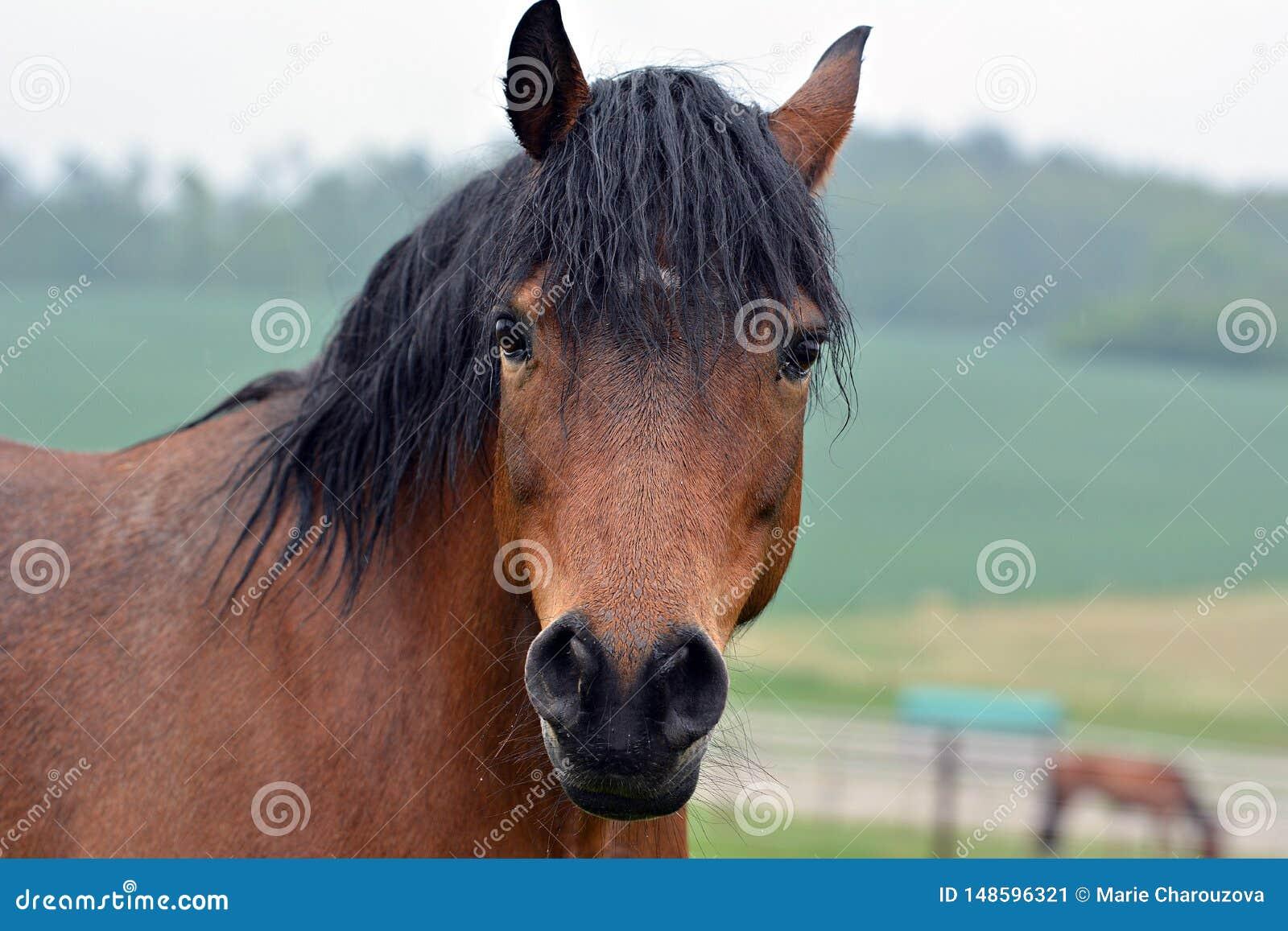 Braunes Pferdenportrait
