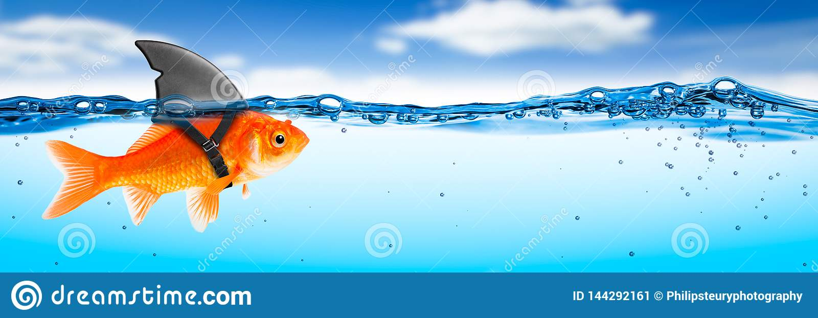 Brave Goldfish With Shark Fin Costume Stock Image - Image of