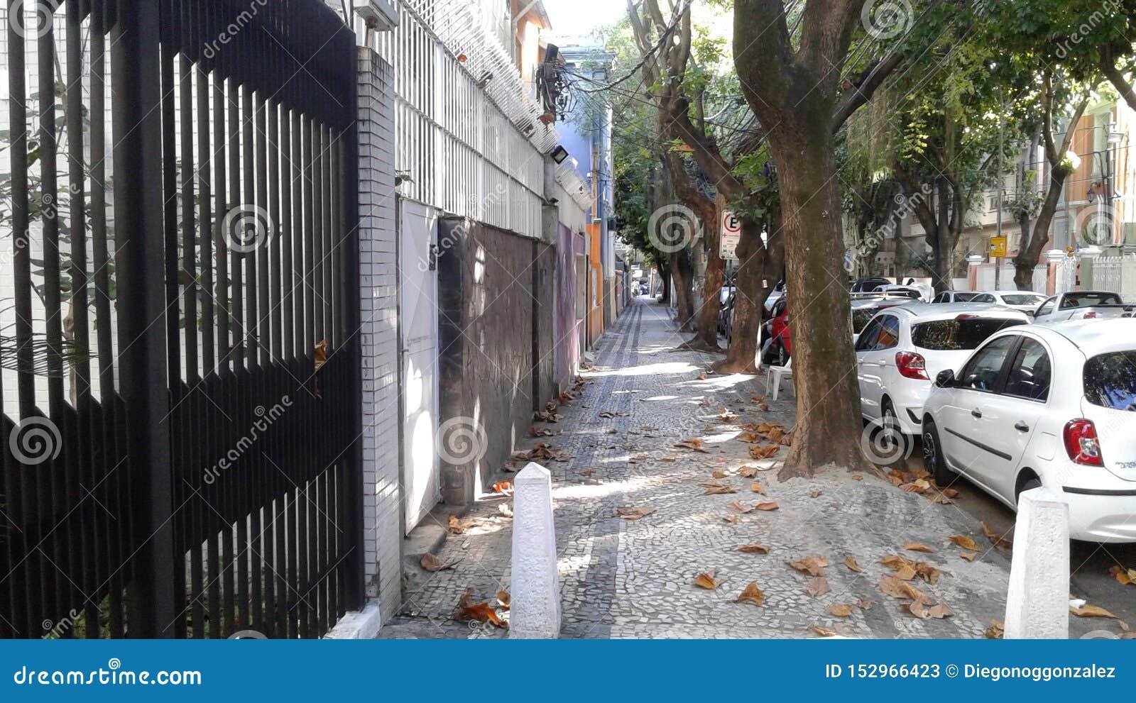 Brazil - Rio de Janeiro - Empty Street - Cars - Trees - Leaves - Cityscape
