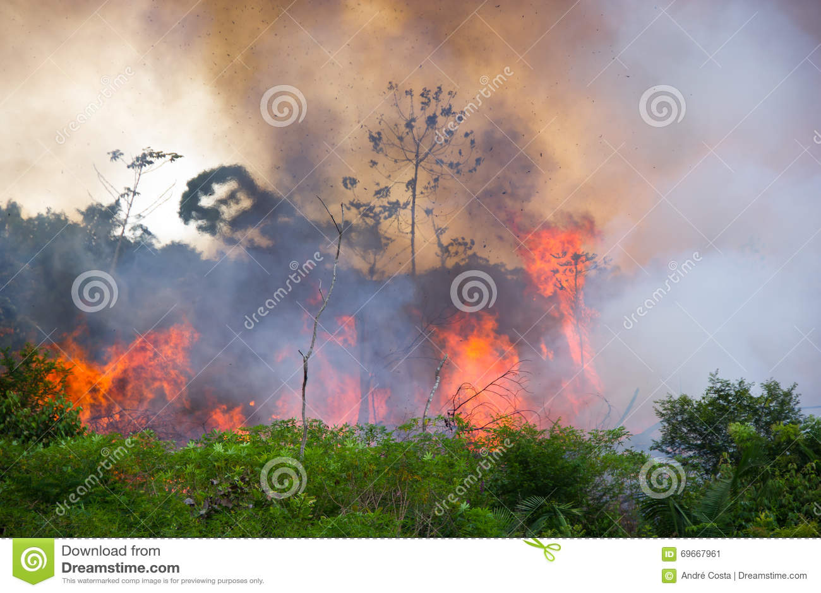 Brazylijski amazonki palenie