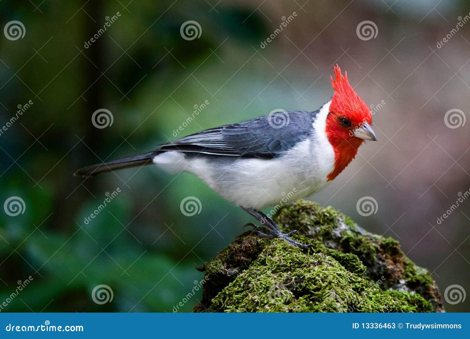 Brazylijski kardynał