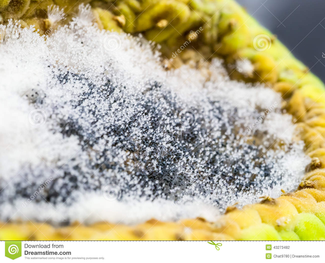 Bread Mold Growing In Ripe Fruit Cell Stock Photo - Image ...