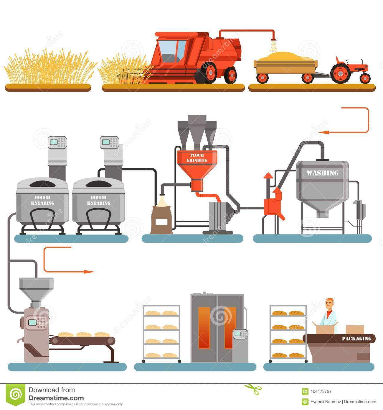 Bread production process stages from wheat harvest to freshly baked bread vector Illustrations