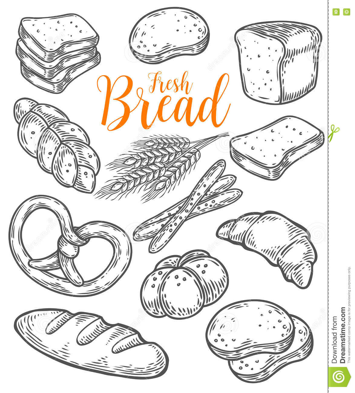 Bread Vector Hand Drawn Set Illustration Other Types Of Wheat
