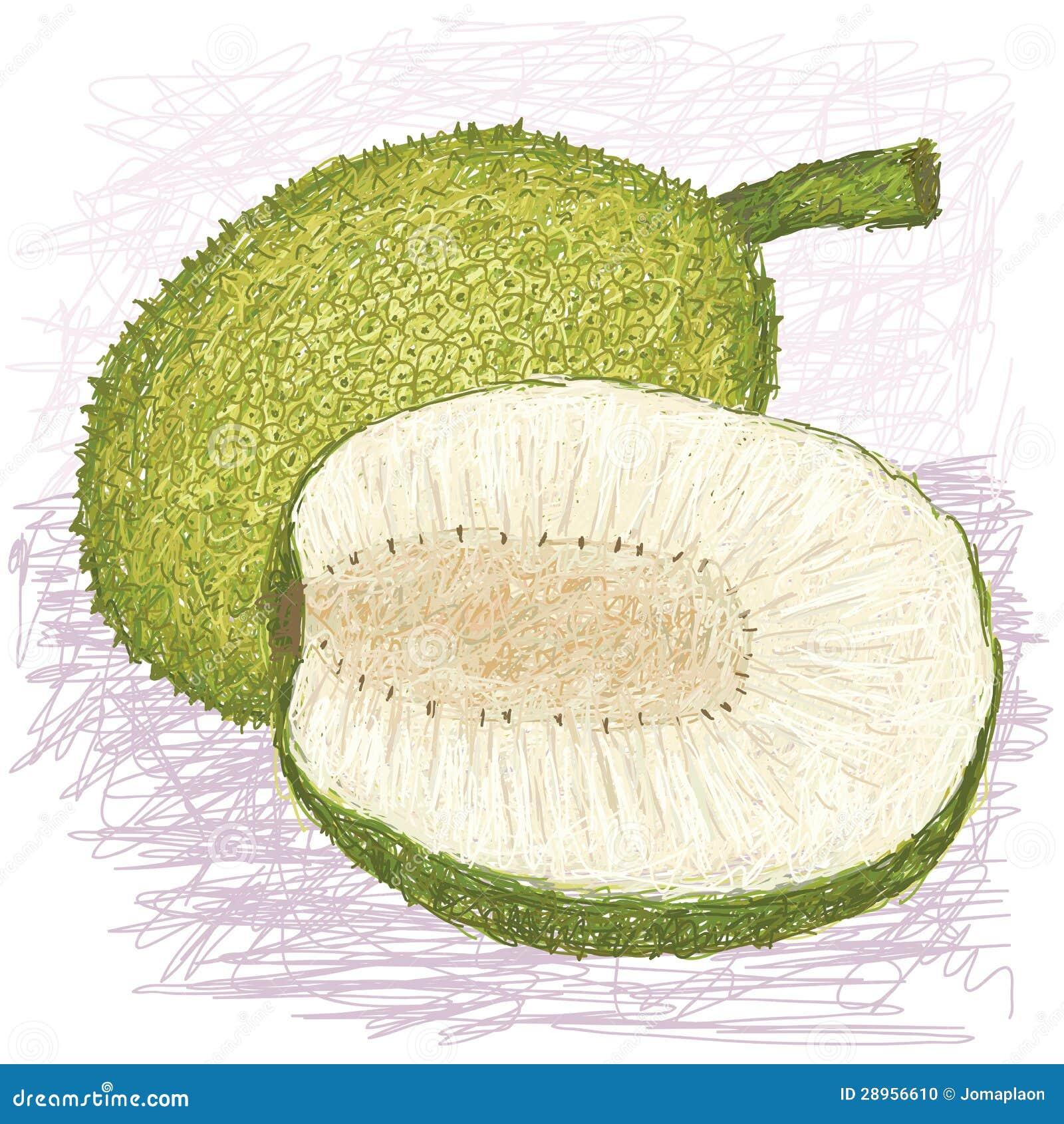 Breadfruit skinned rozmaitość całą i połówkę pokrajać