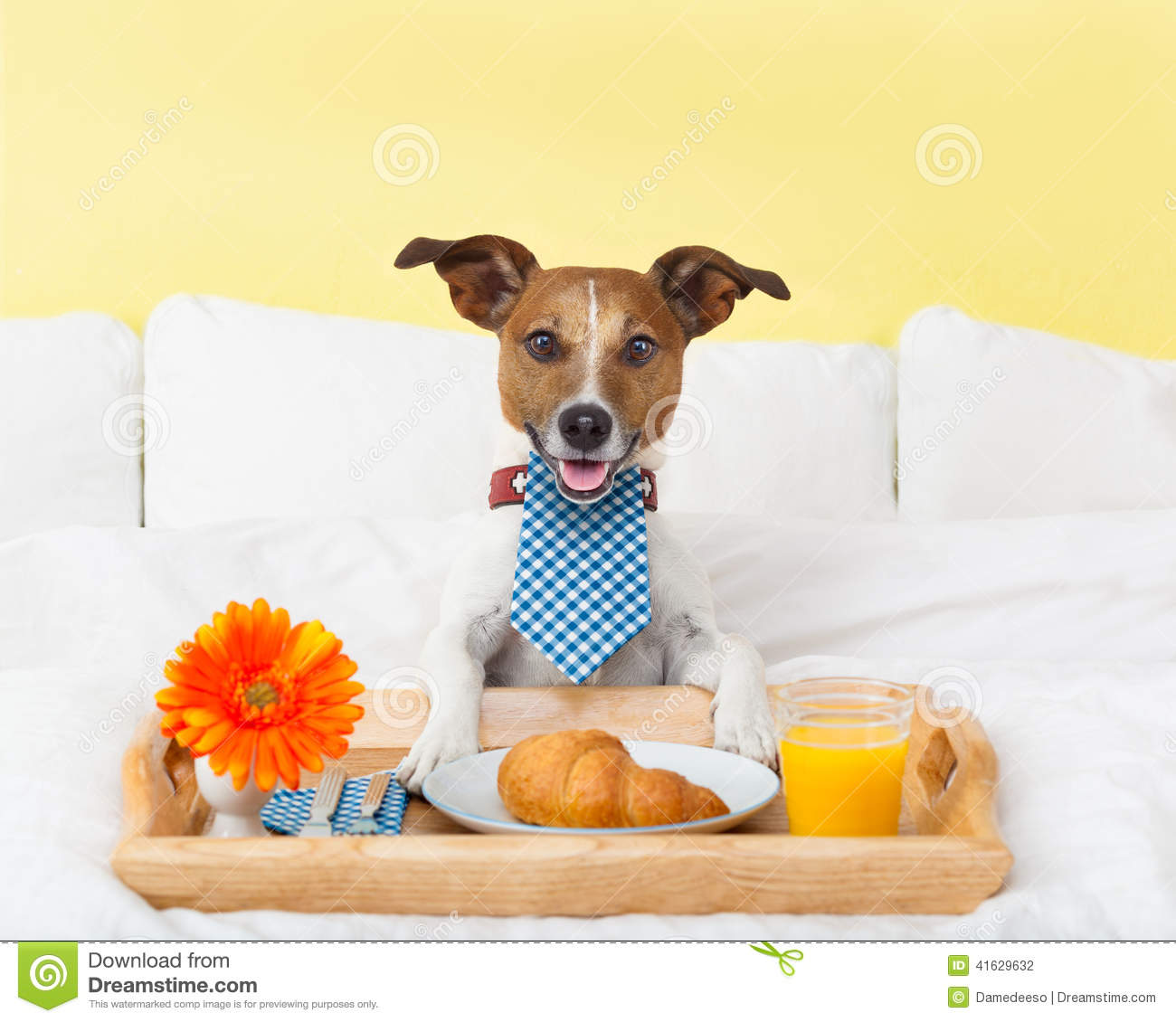 Breakfast In Bed Stock Photo - Image: 41629632