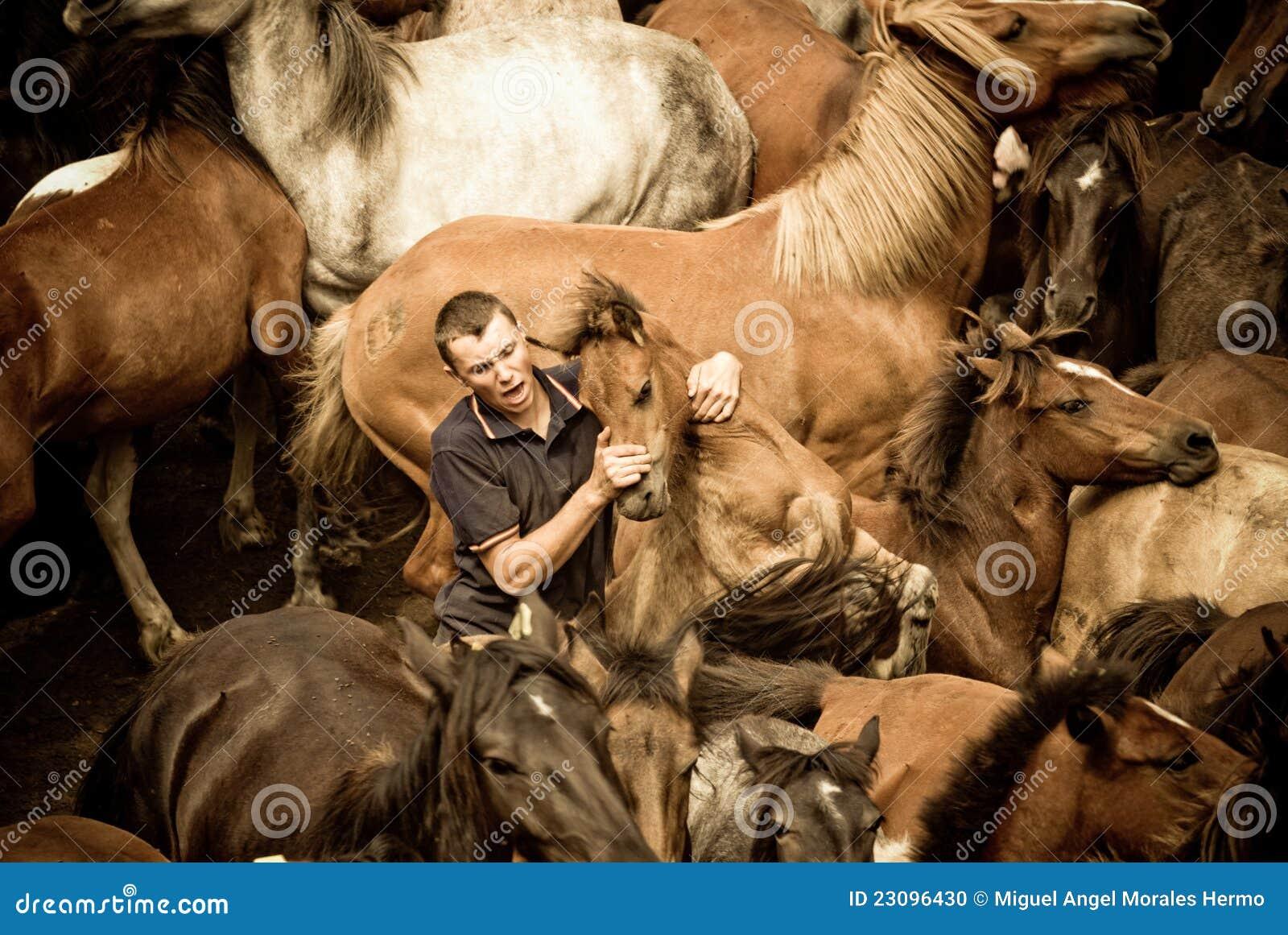 Breaking Horses Editorial Image Image 23096430