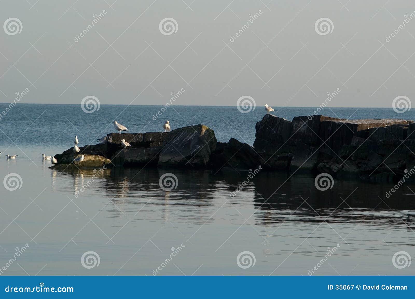 Breakwater with Gulls