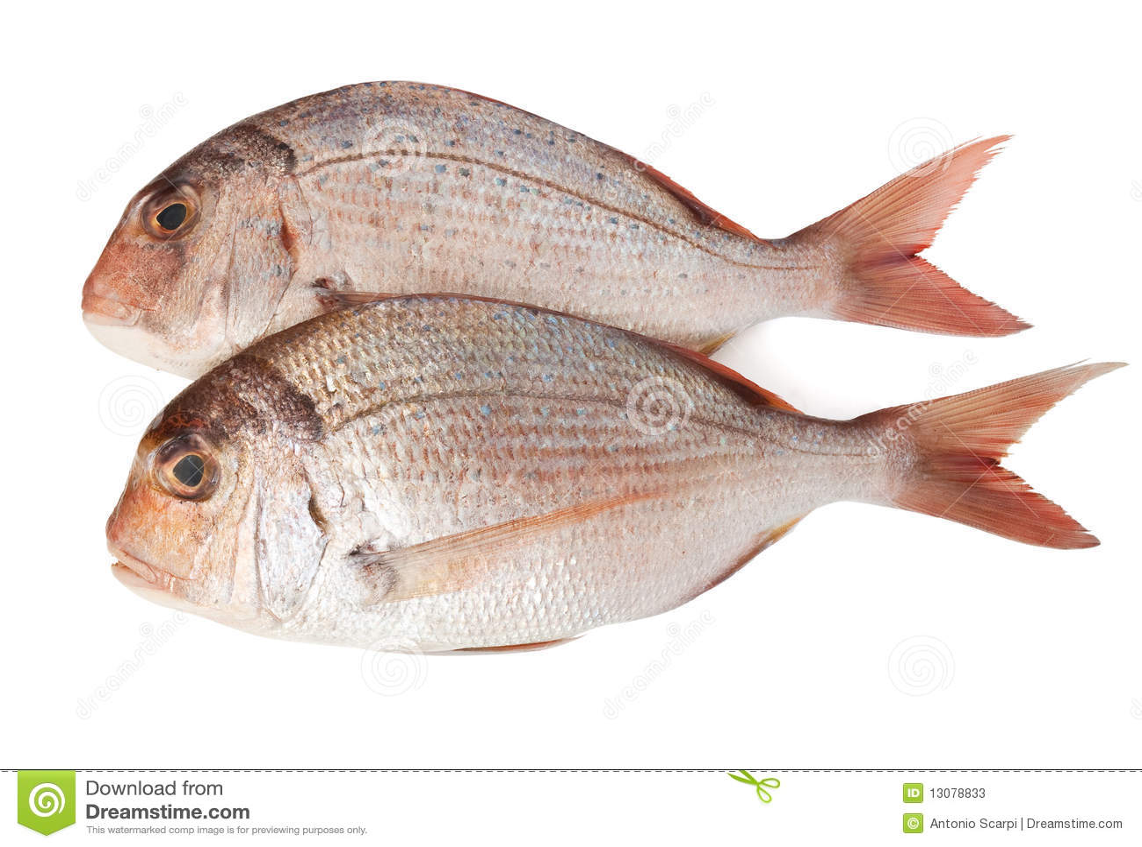 Bream θάλασσα δύο pagellus