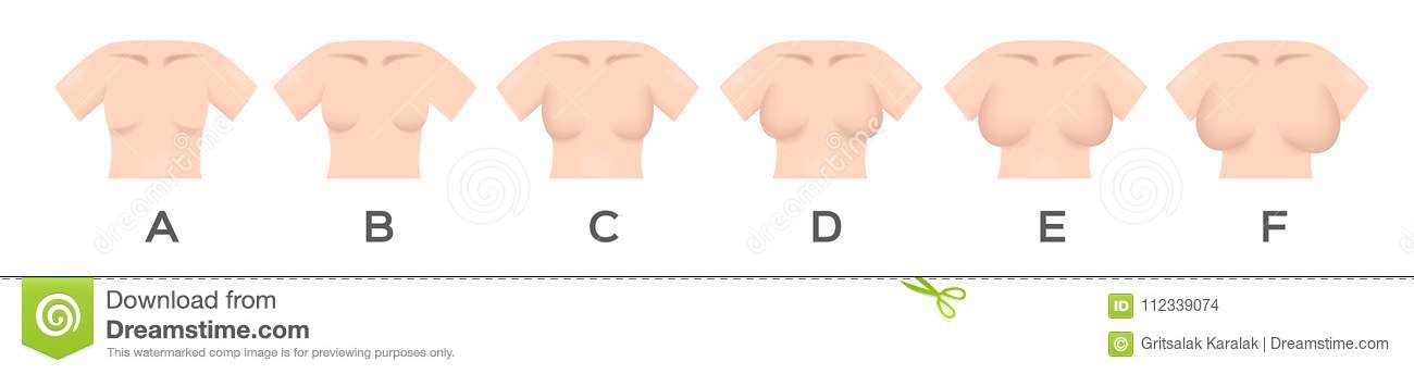 best service 3e414 0e8fa Breast Size And Type Vector Stock Vector - Illustration of ...