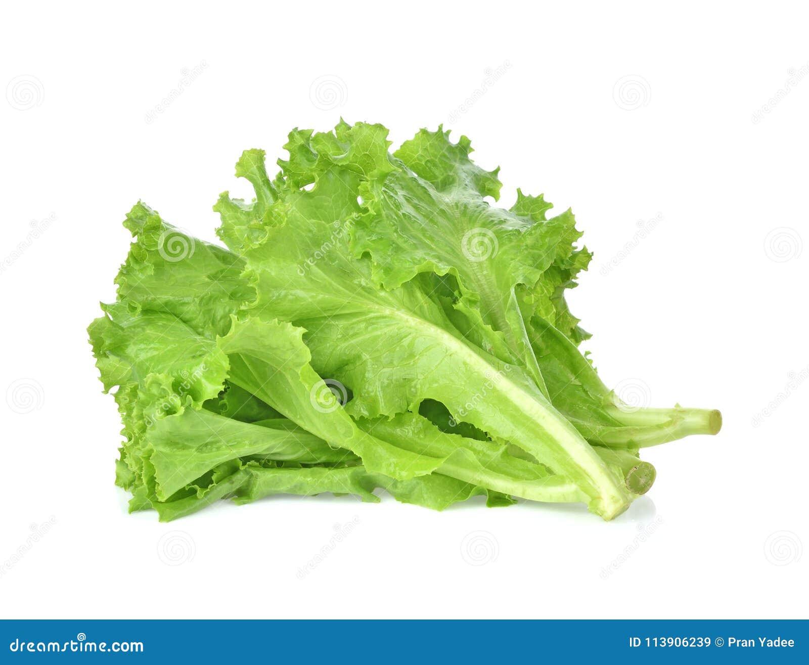 Breda smör på head grönsallat, det knapriga huvudet, isberget som isoleras på den vita backgroen