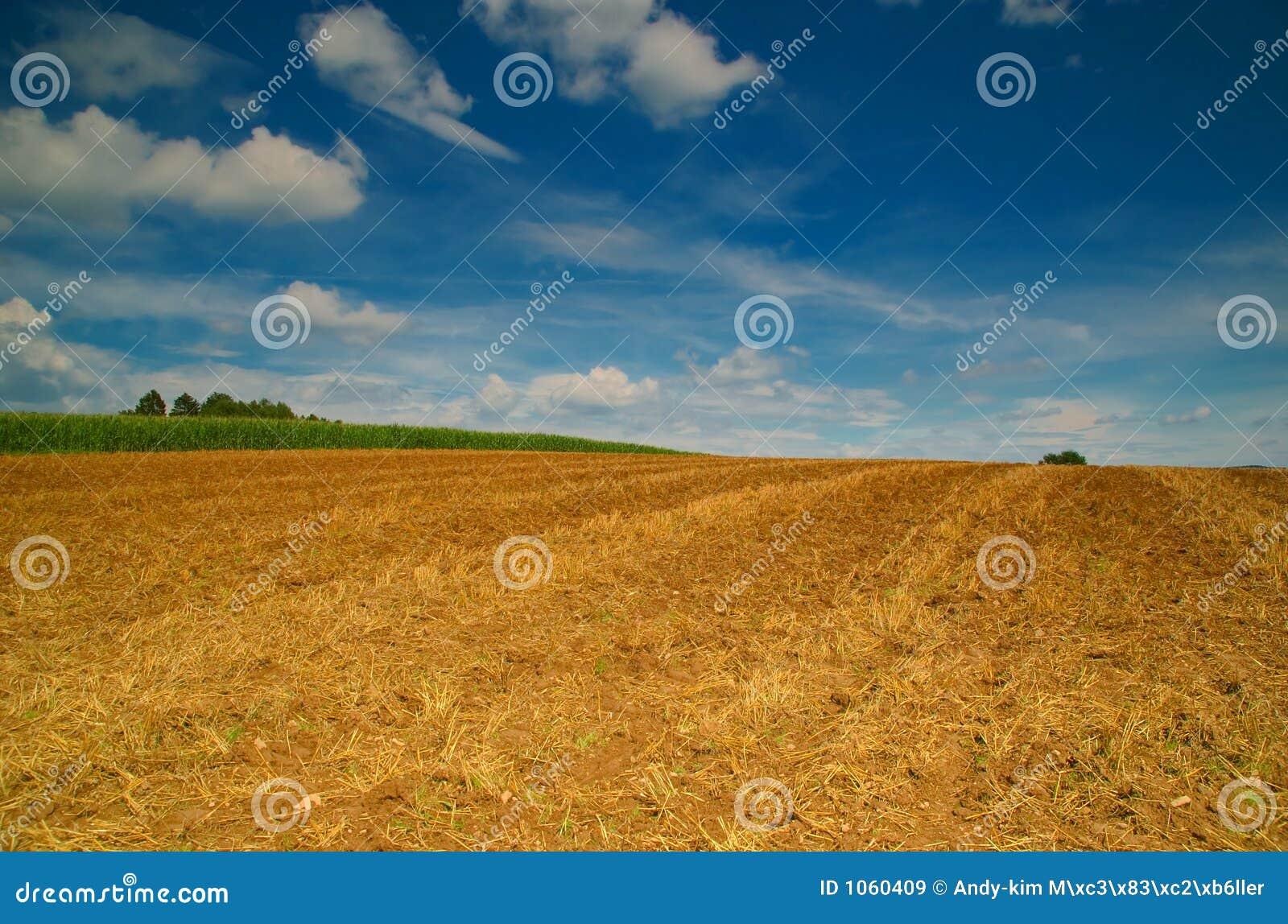 Brede cornfield