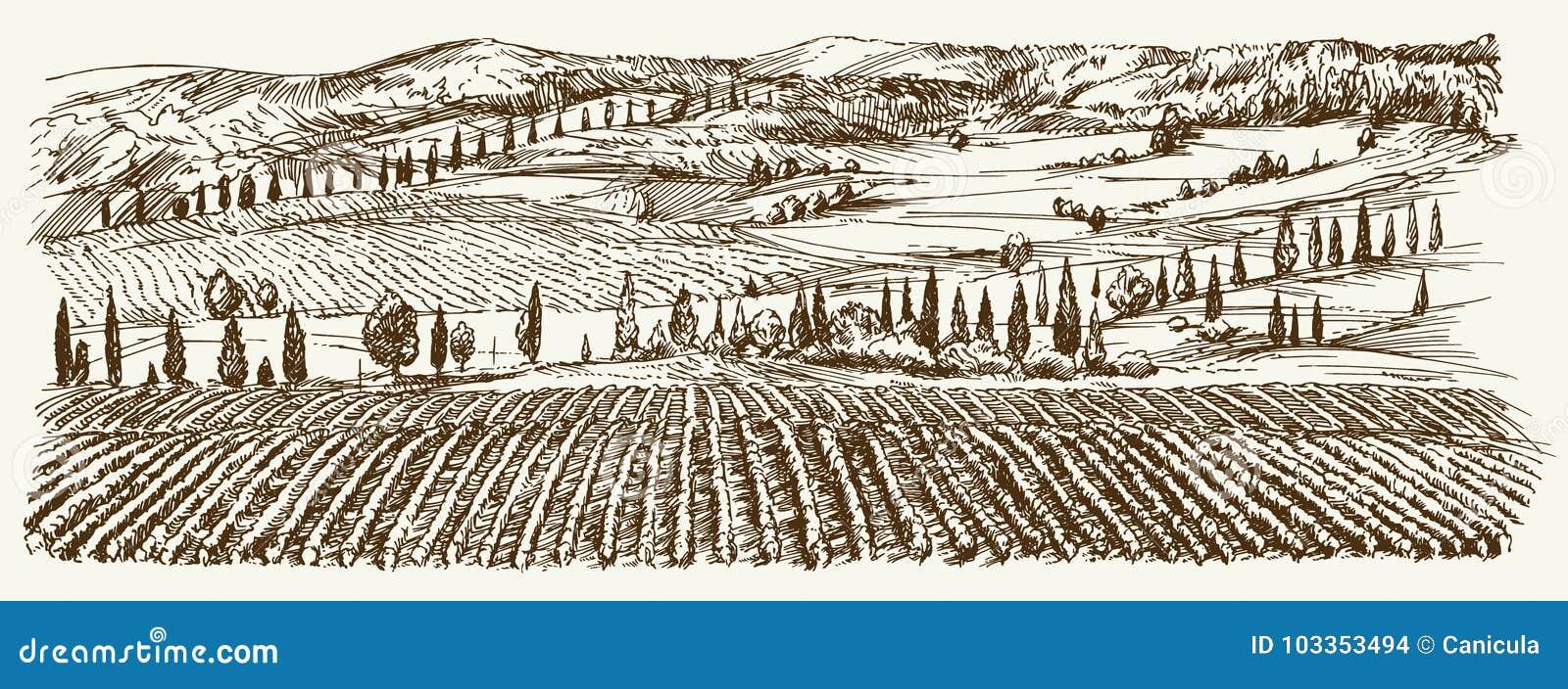 Brede mening van wijngaard Het panorama van het wijngaardlandschap