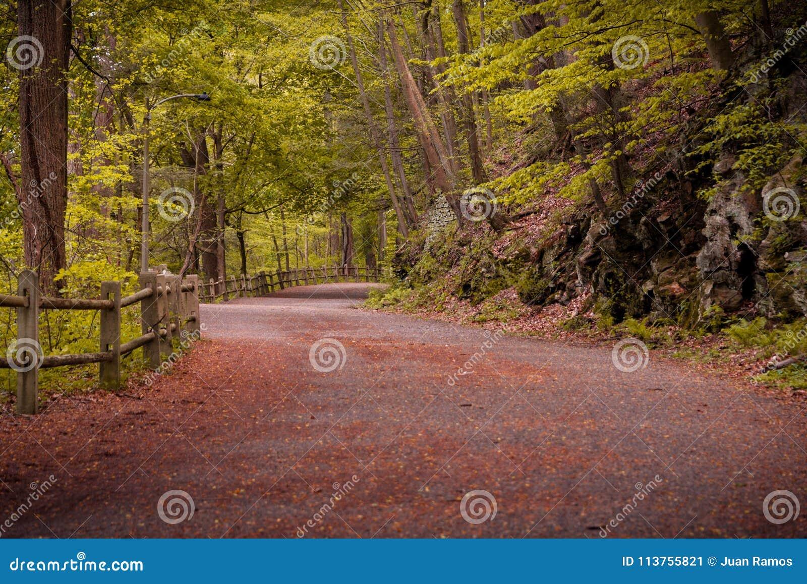Brede weg door bos