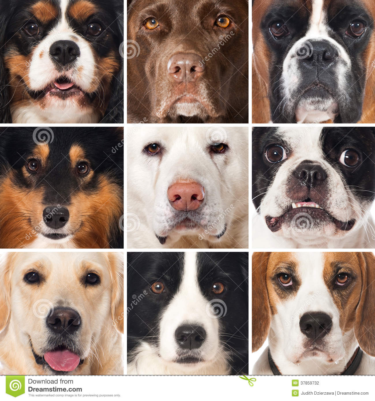 Breed Dogs Collage Stock Photography Image 37859732