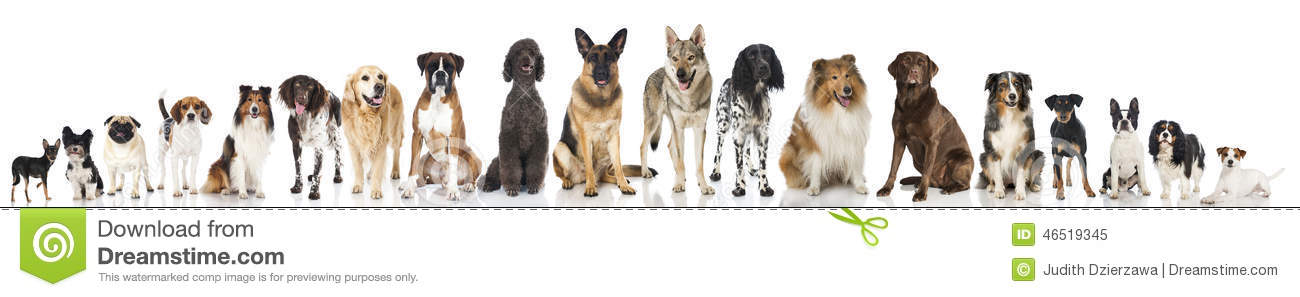 Breed dogs