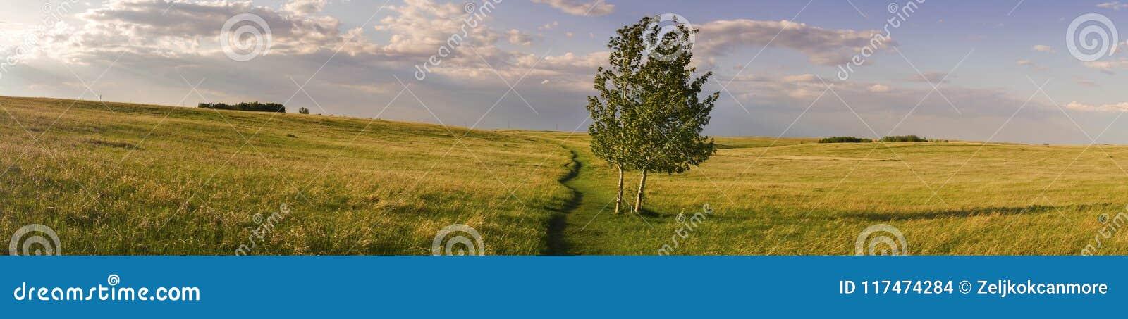 Breed Panoramisch Landschap en Geïsoleerd van het de Heuvelpark van de Boomneus de Prairiegras Alberta Foothills