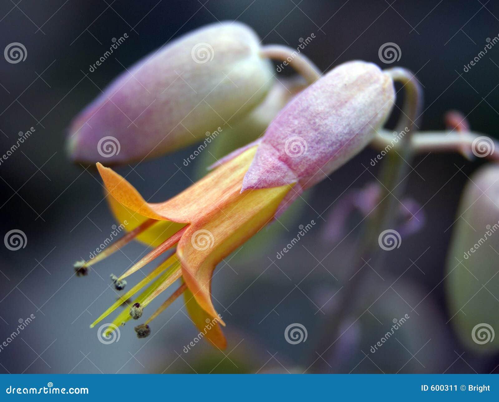 Breekbare bloem