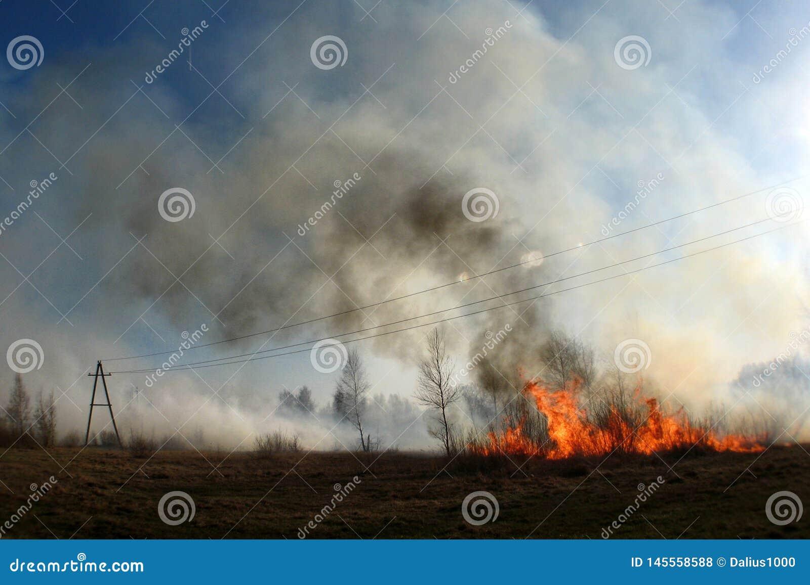 Brennen des Strohs auf dem Feldrauche, Feuer