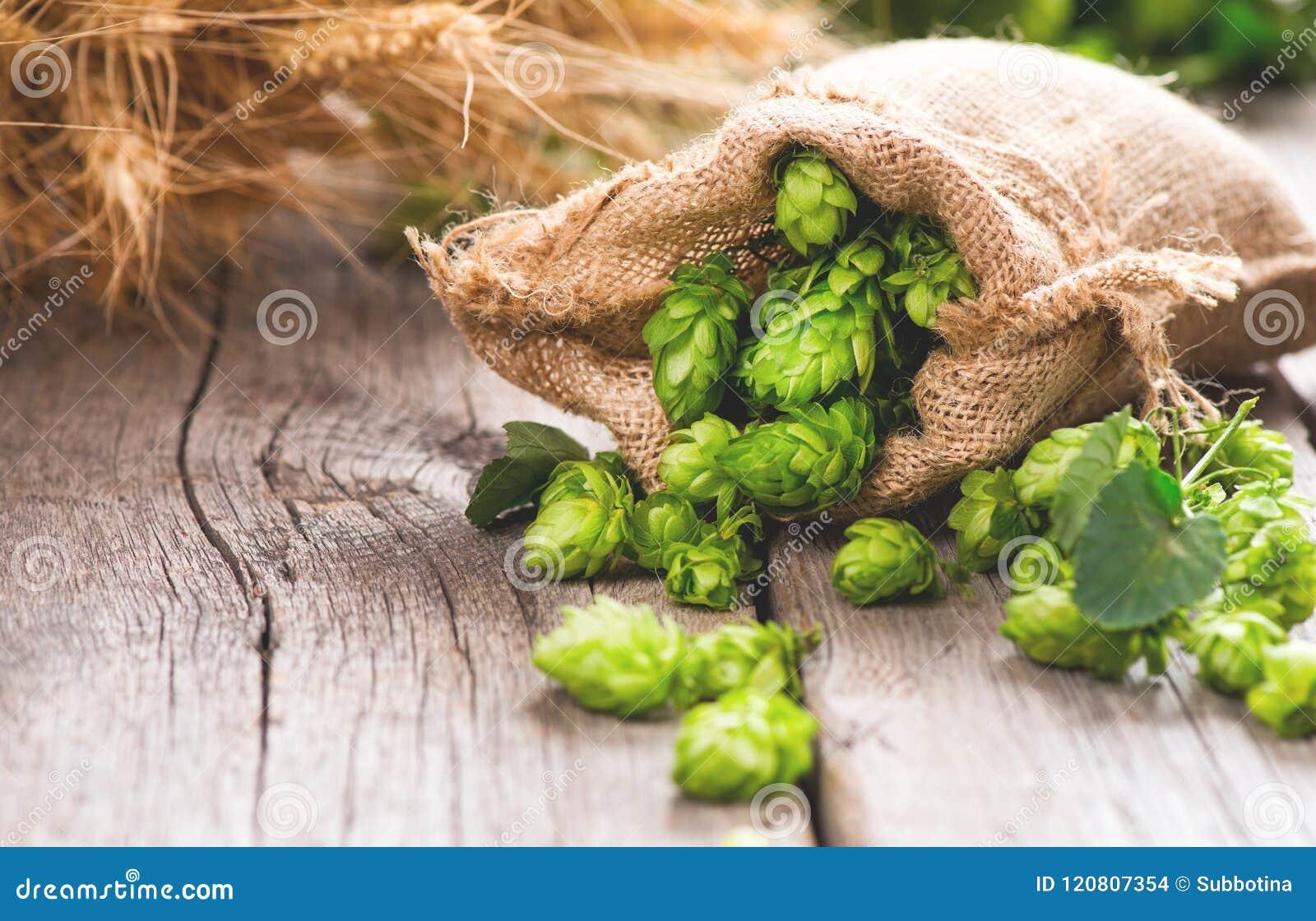 Brewery Coni di speranza e primo piano delle orecchie del grano Ingredienti di produzione della birra sulla tavola incrinata di l
