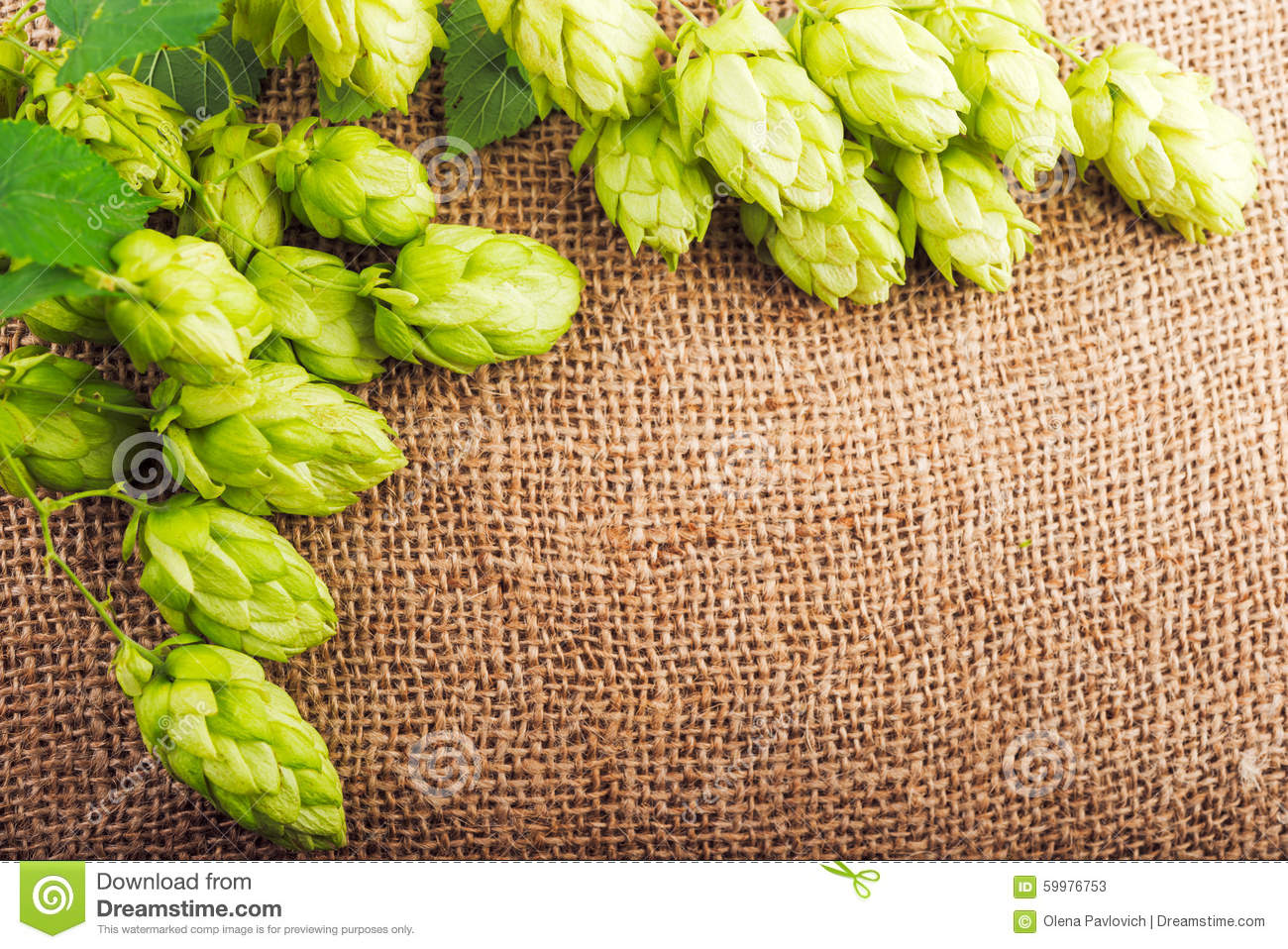 Brewing concept. Ingredients for beer production
