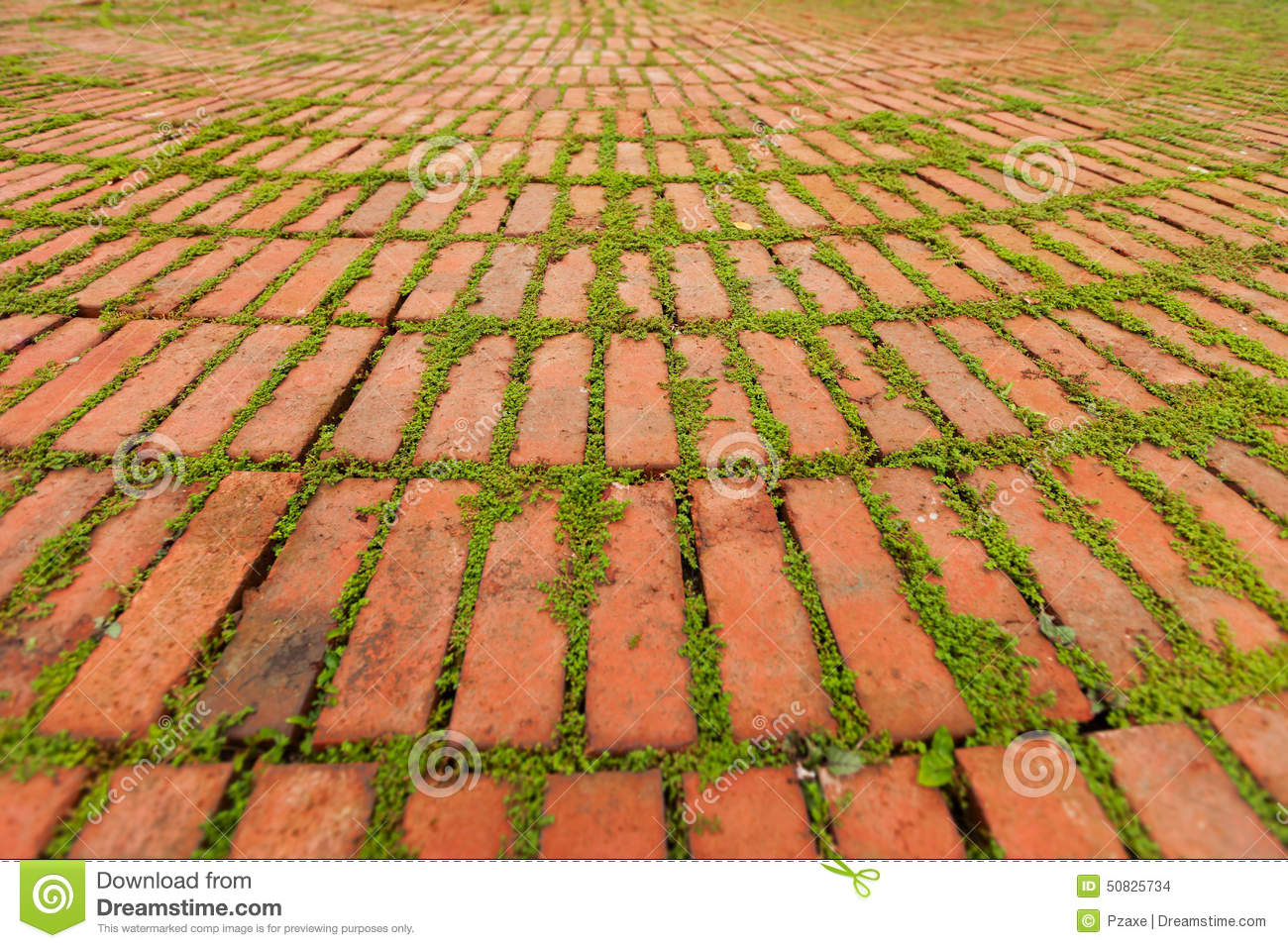 Brick Pavers Outlined By Green Plants Growing Between