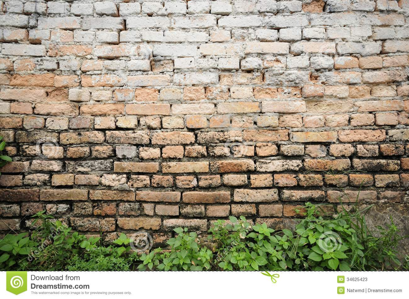 Brick Wall Background With Plants Stock Photos Image