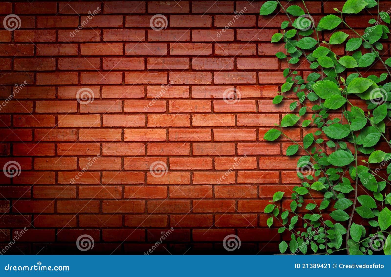 Brick Wall With Climbing Plants Stock Image