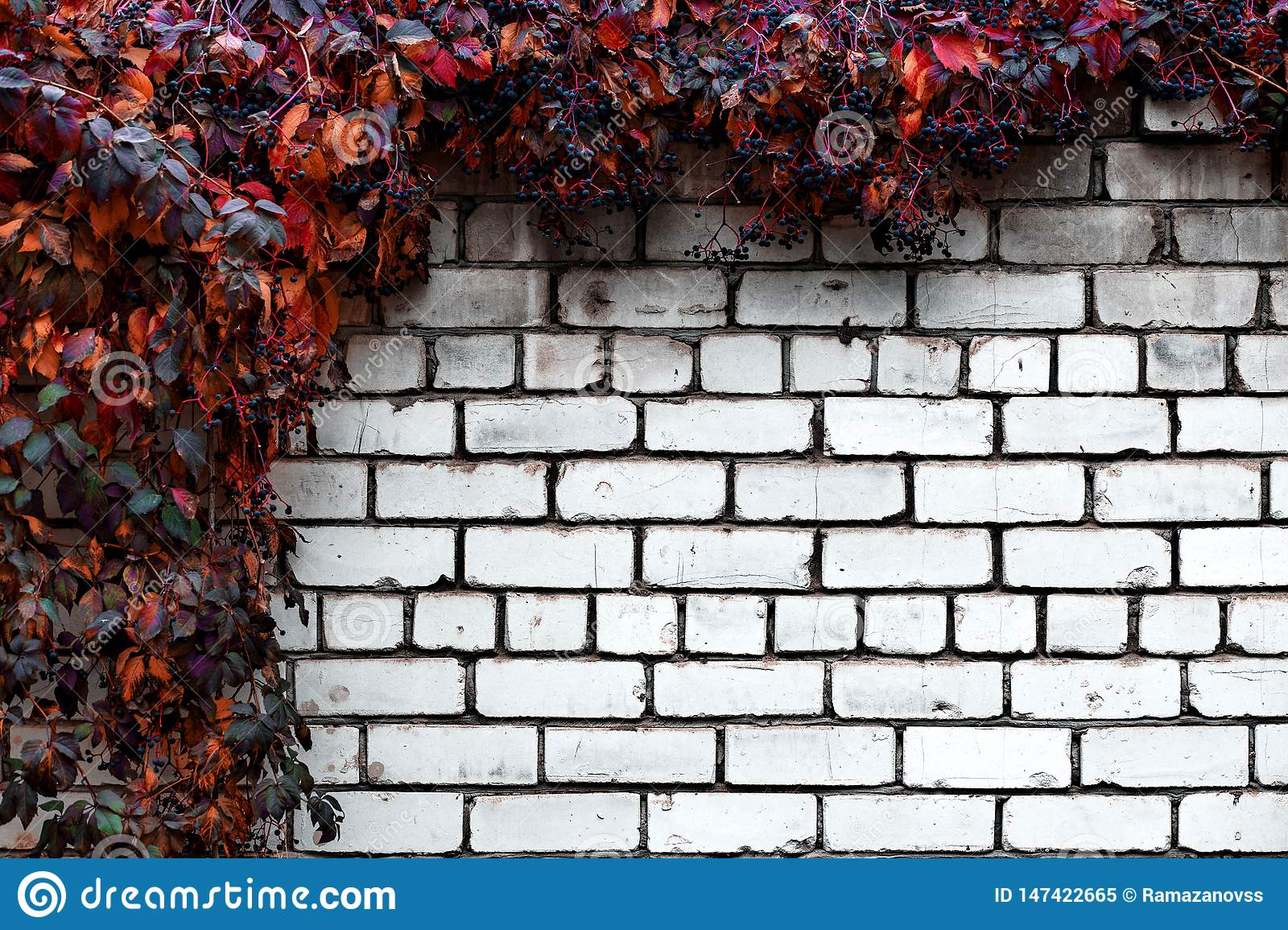 Brick wall with decorative grapes abstract background