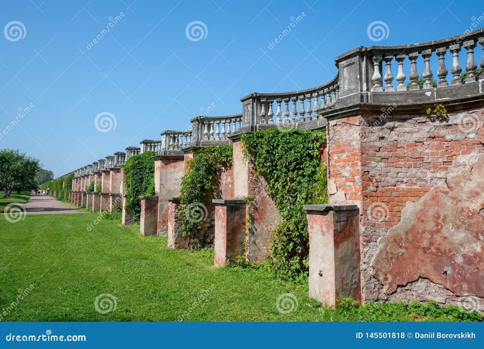 Brick wall overgrown wild grapes