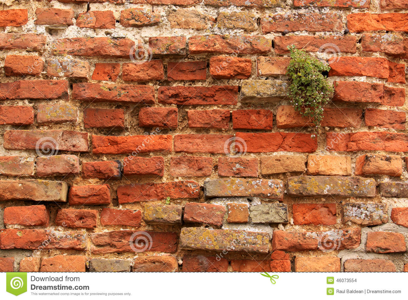 Brick wall with plant