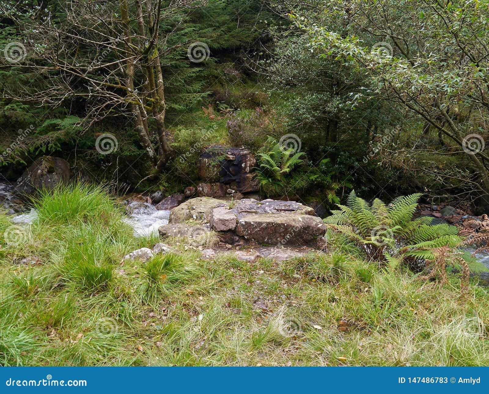Bridżowi cokoły w lesie bez mostu