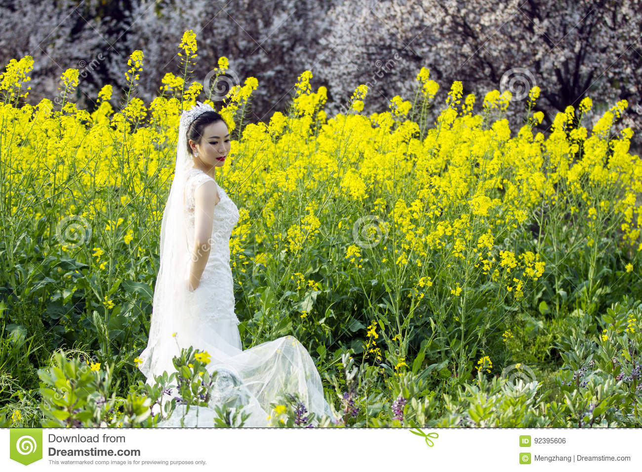 Bride Portraint With White Wedding Dress In Cole Flower Field Stock