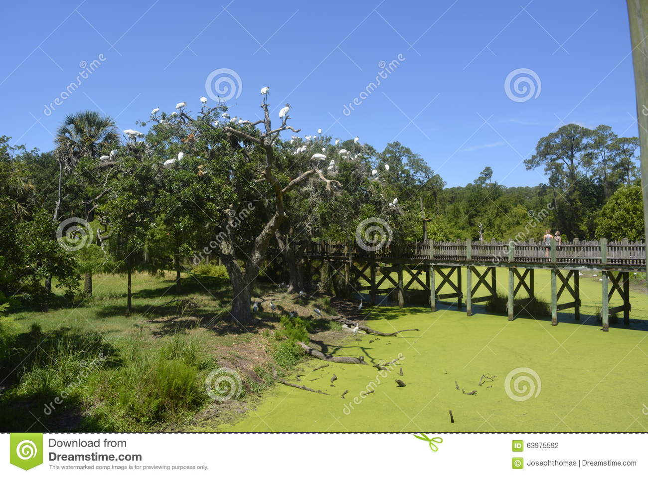 Wooden Bridge In Central Park Stock Photo Image 63975592
