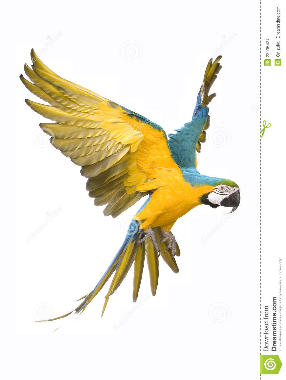 Bright ara parrot flying