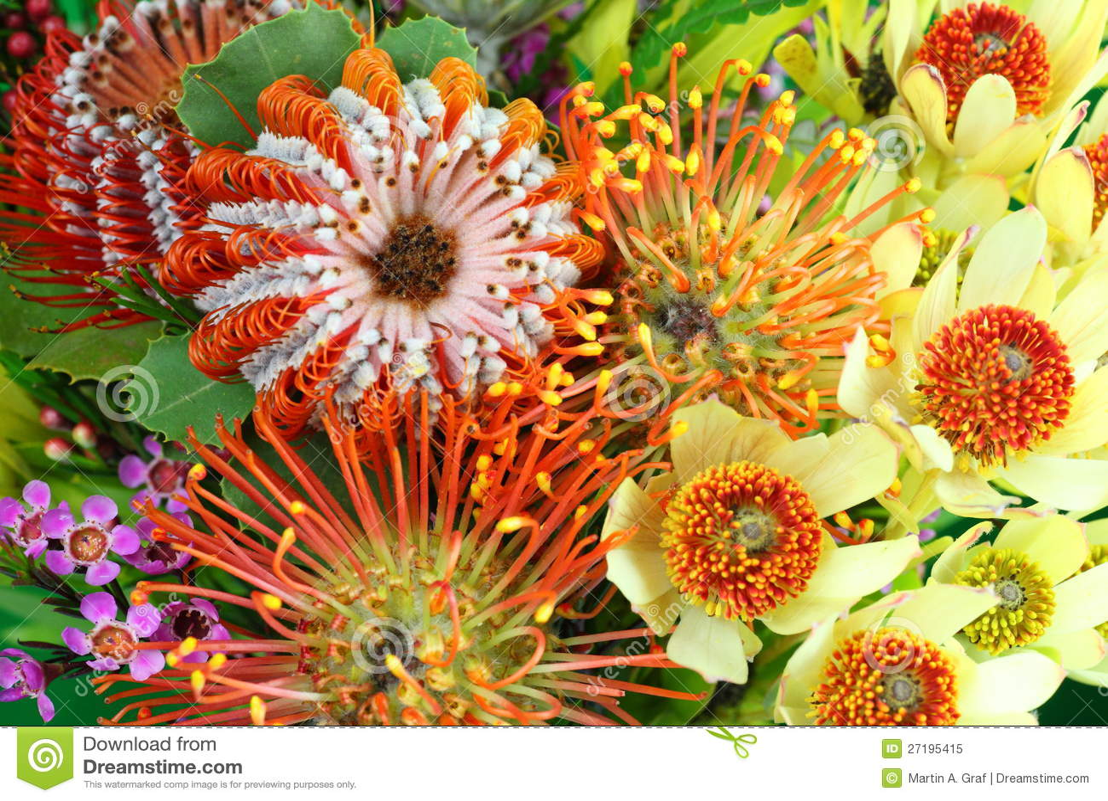 Bright Australian native flowers