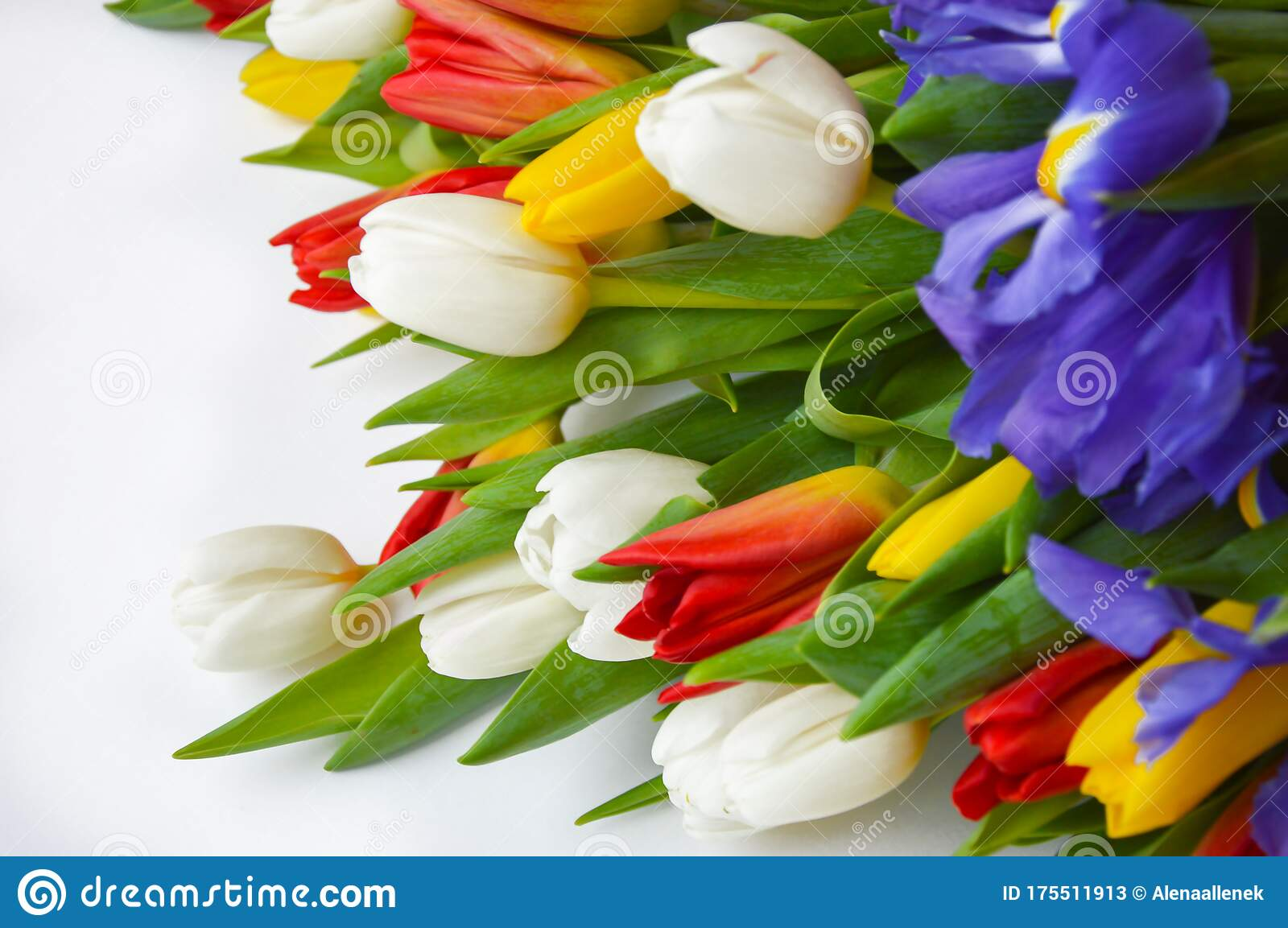 Bright Bouquet Of Tulips Flowers Are White Red Yellow And Blue Stock Image Image Of Garden Background 175511913