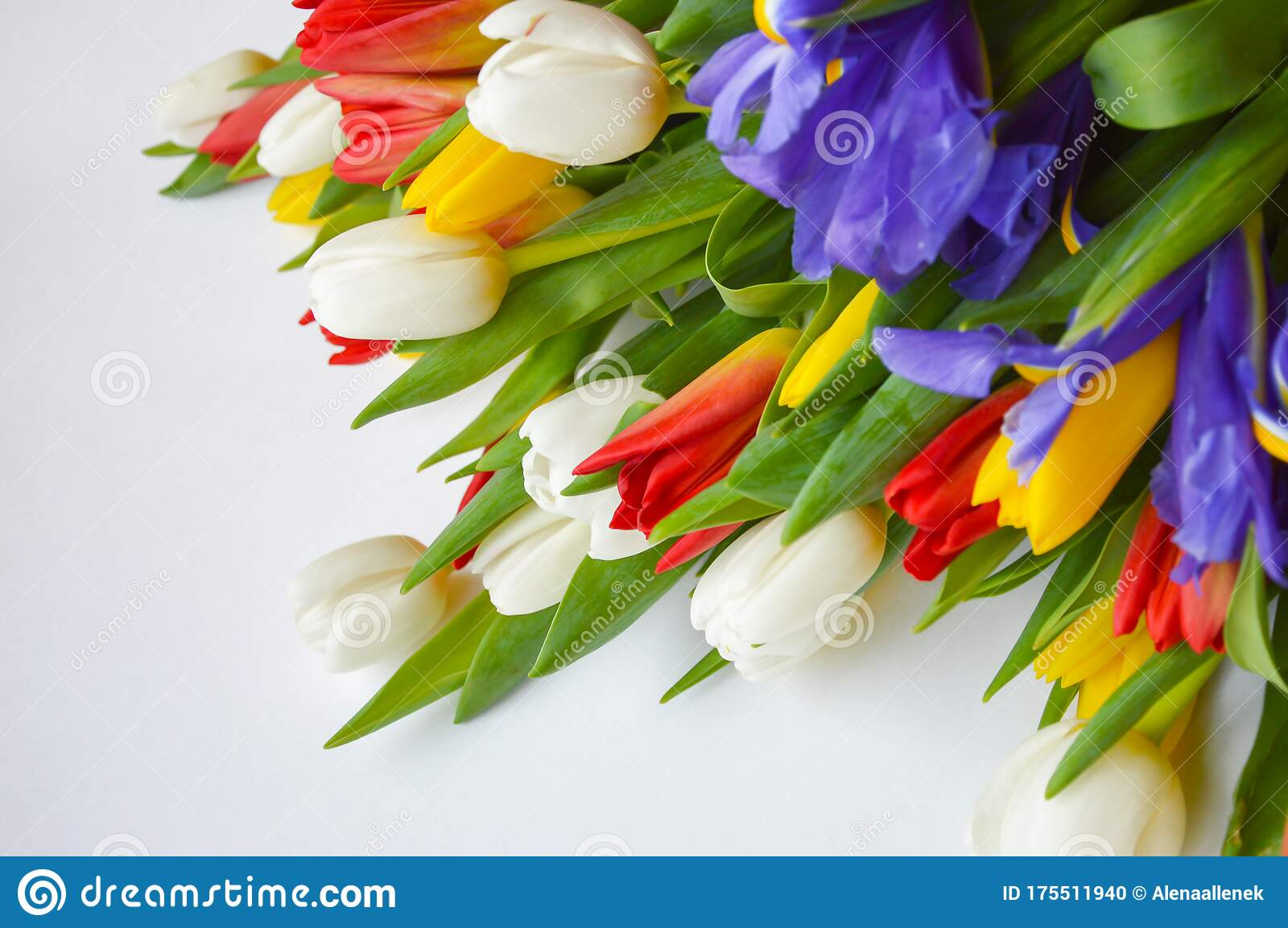 Bright Bouquet Of Tulips Flowers Are White Red Yellow And Blue Stock Photo Image Of Color Season 175511940