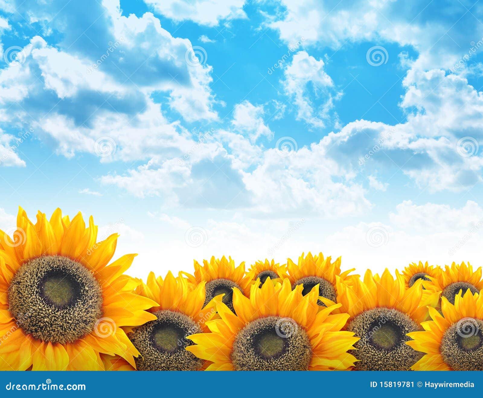 Bright Beautiful Flower Sunflower Background Stock Image ...
