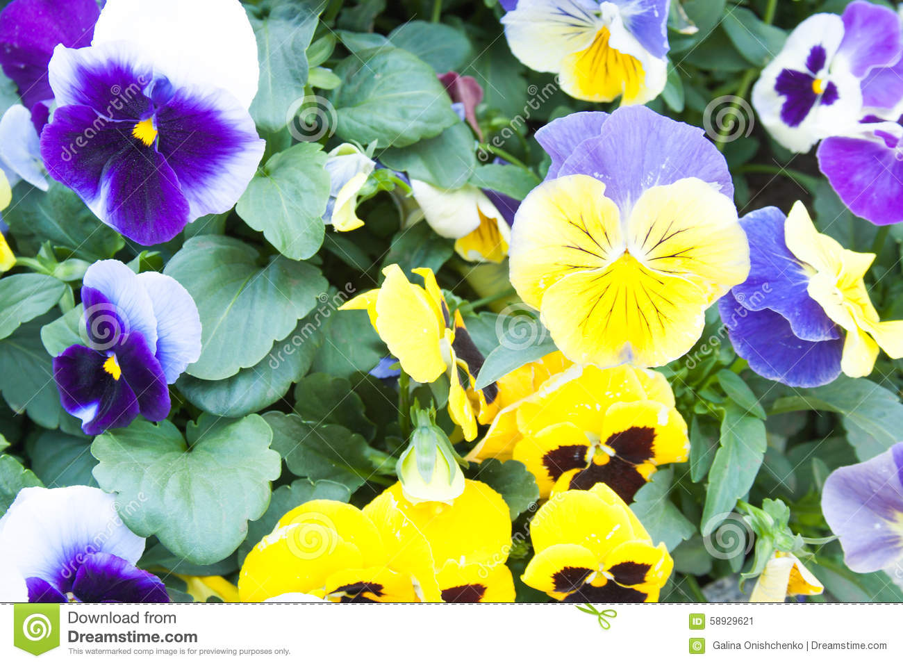 Bright Beautiful Flowers Grow On A Flowerbed Stock Image Image Of