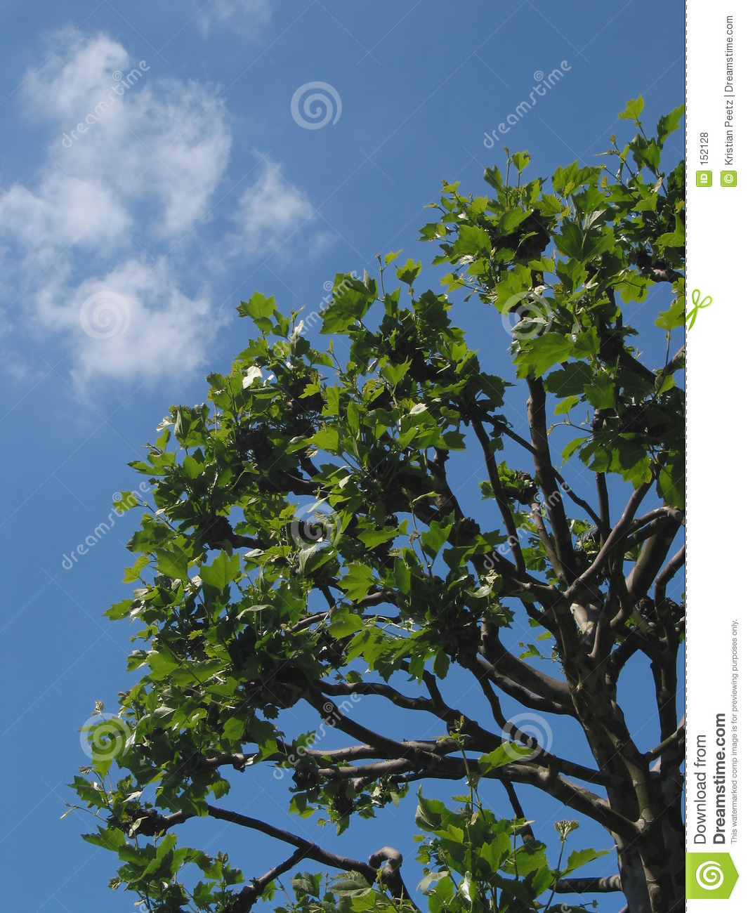 Bright blue sky and a tree