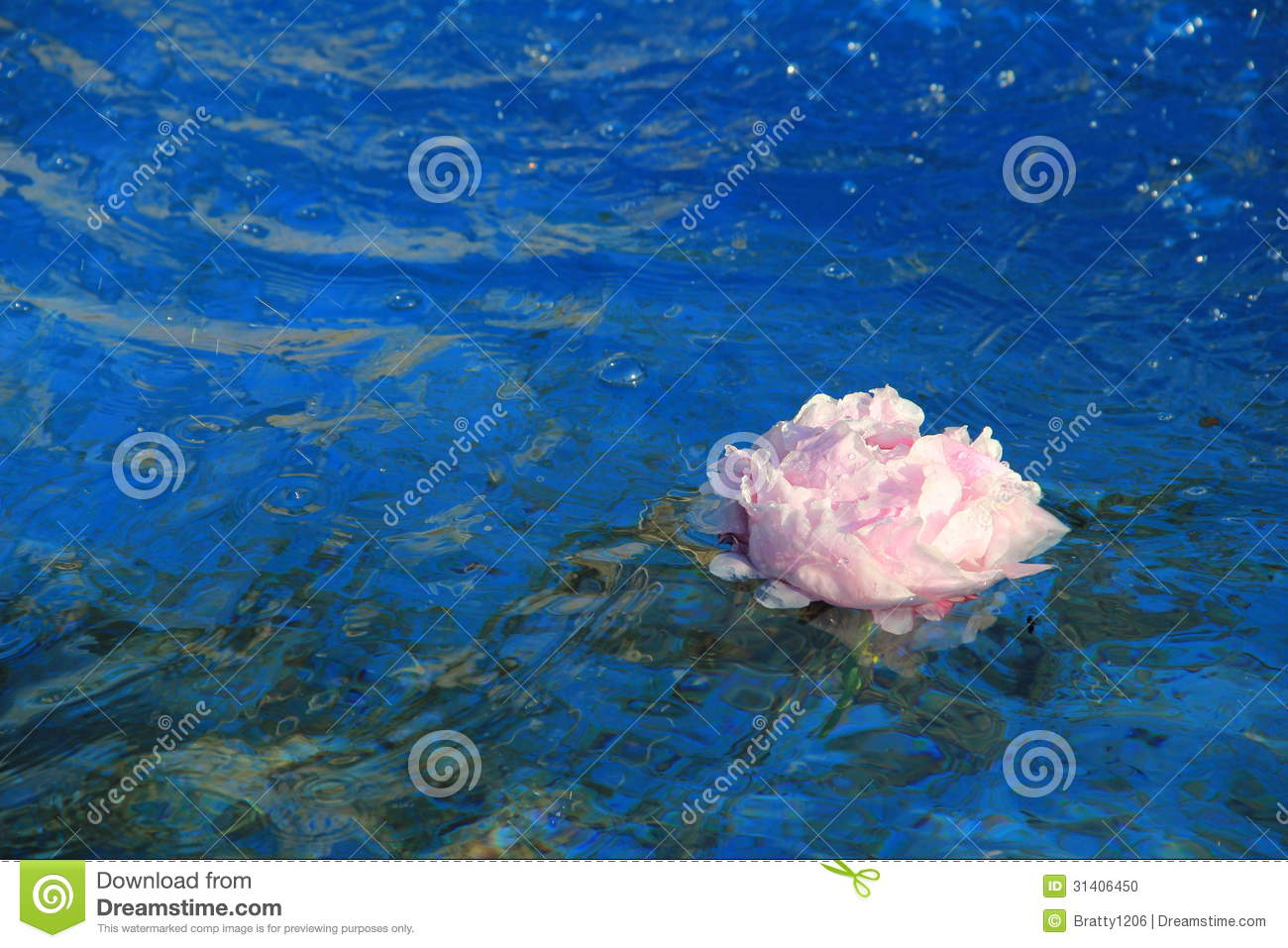Bright blue water fountain with pink floating flower stock for Floating flowers in water