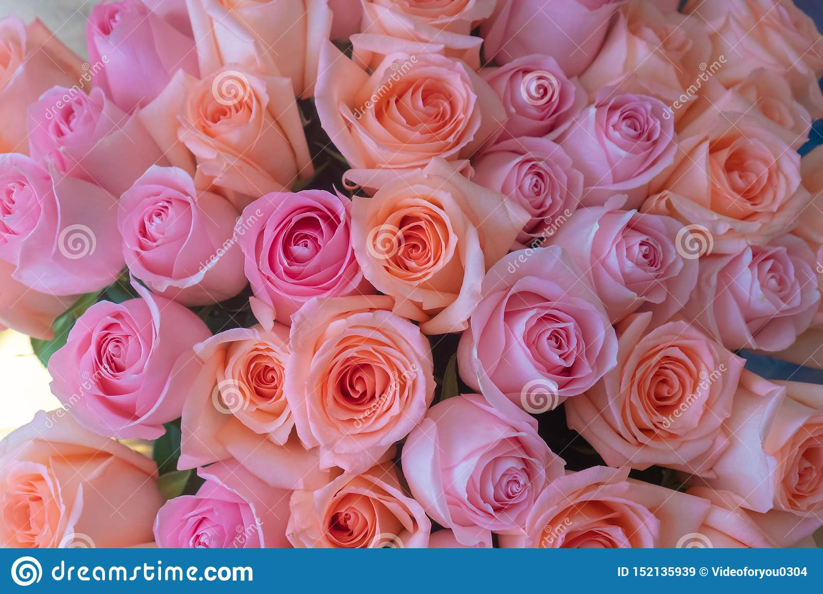 77 914 Birthday Roses Photos Free Royalty Free Stock Photos From Dreamstime