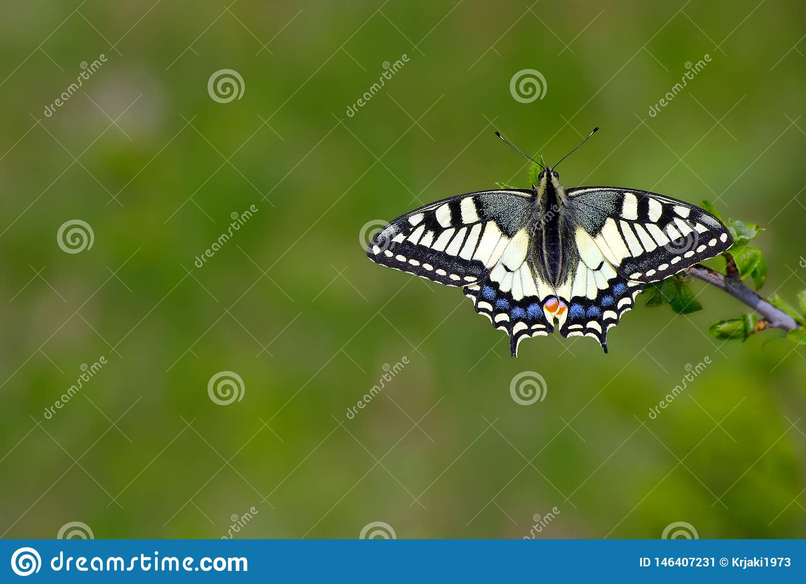 Bright butterfly machaon in the meadow. butterfly sitting on a branch. close up copy spaces.