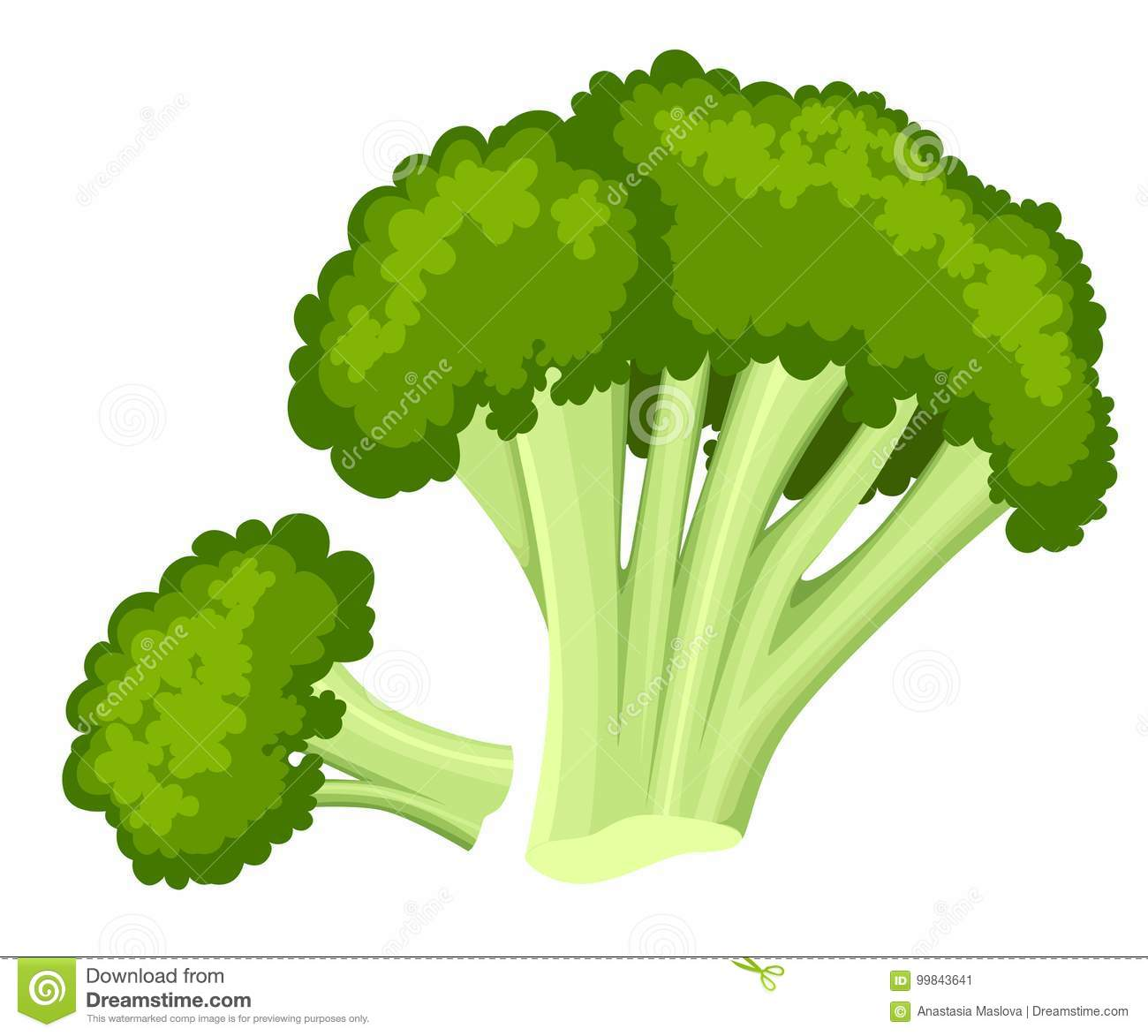 d7159d60 Bright collection of colorful broccoli. Fresh cartoon different vegetable  isolated on white background used for