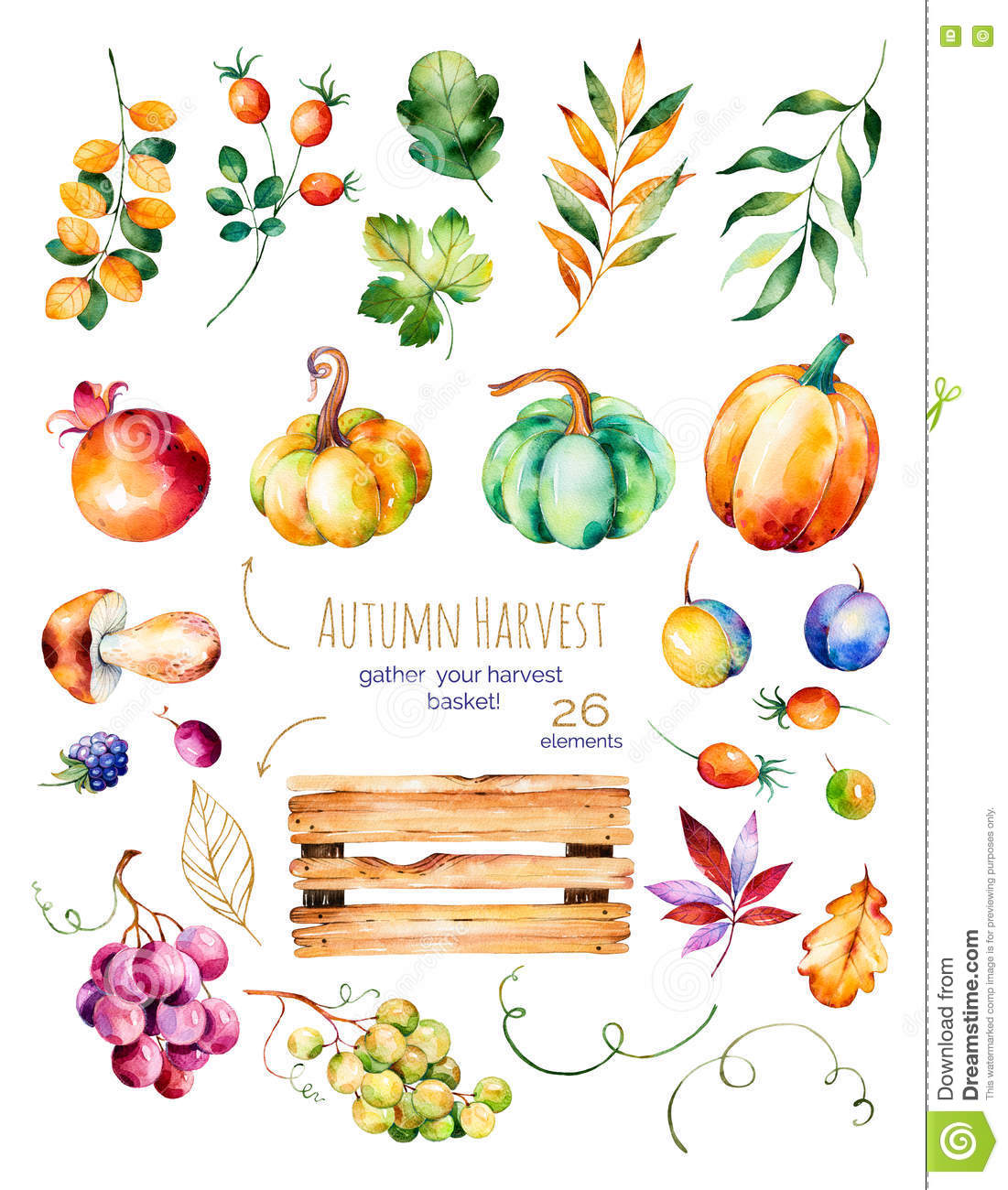 Bright collection with fall leaves,branches,wooden basket