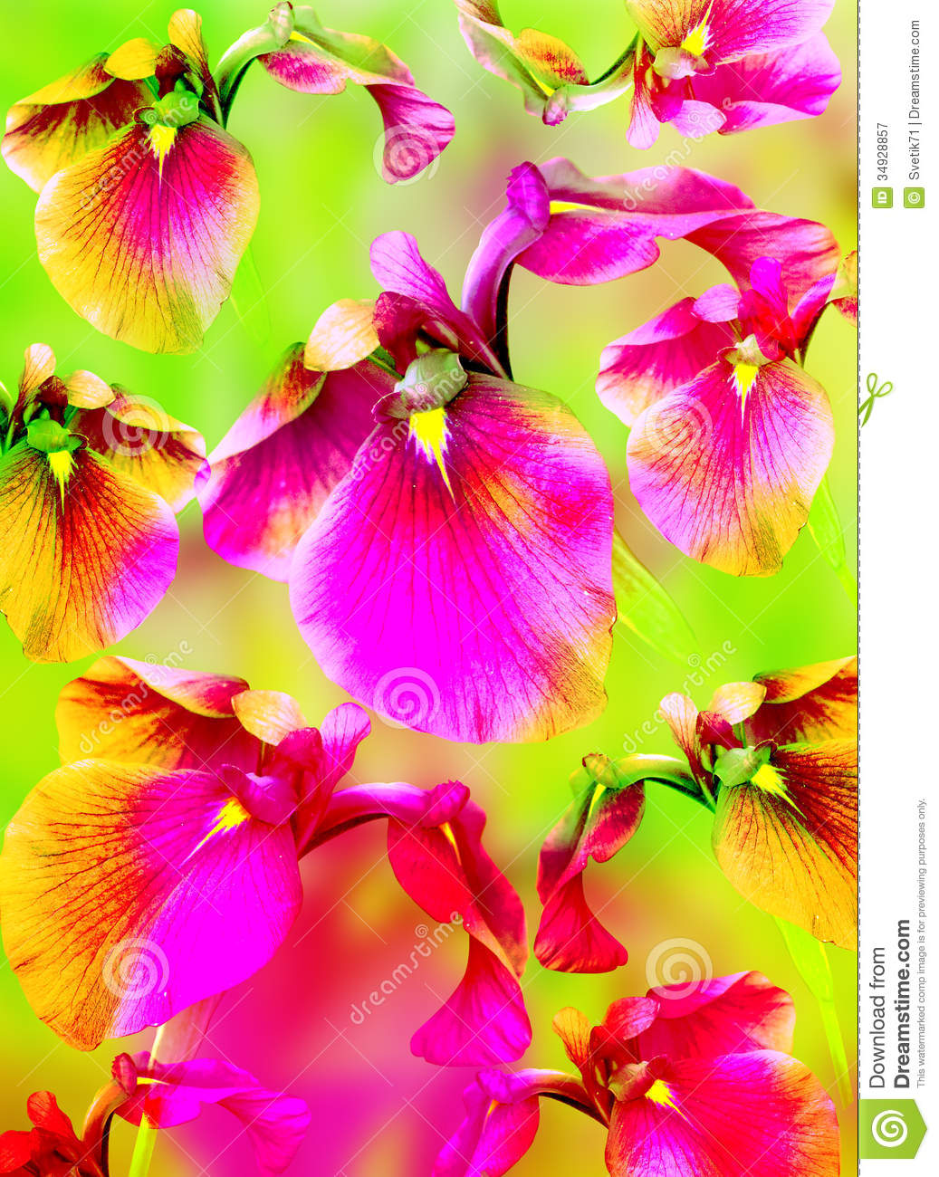 Bright Color Background With Pink Flowers Royalty Free ... Dark Purple Orchid Bouquet