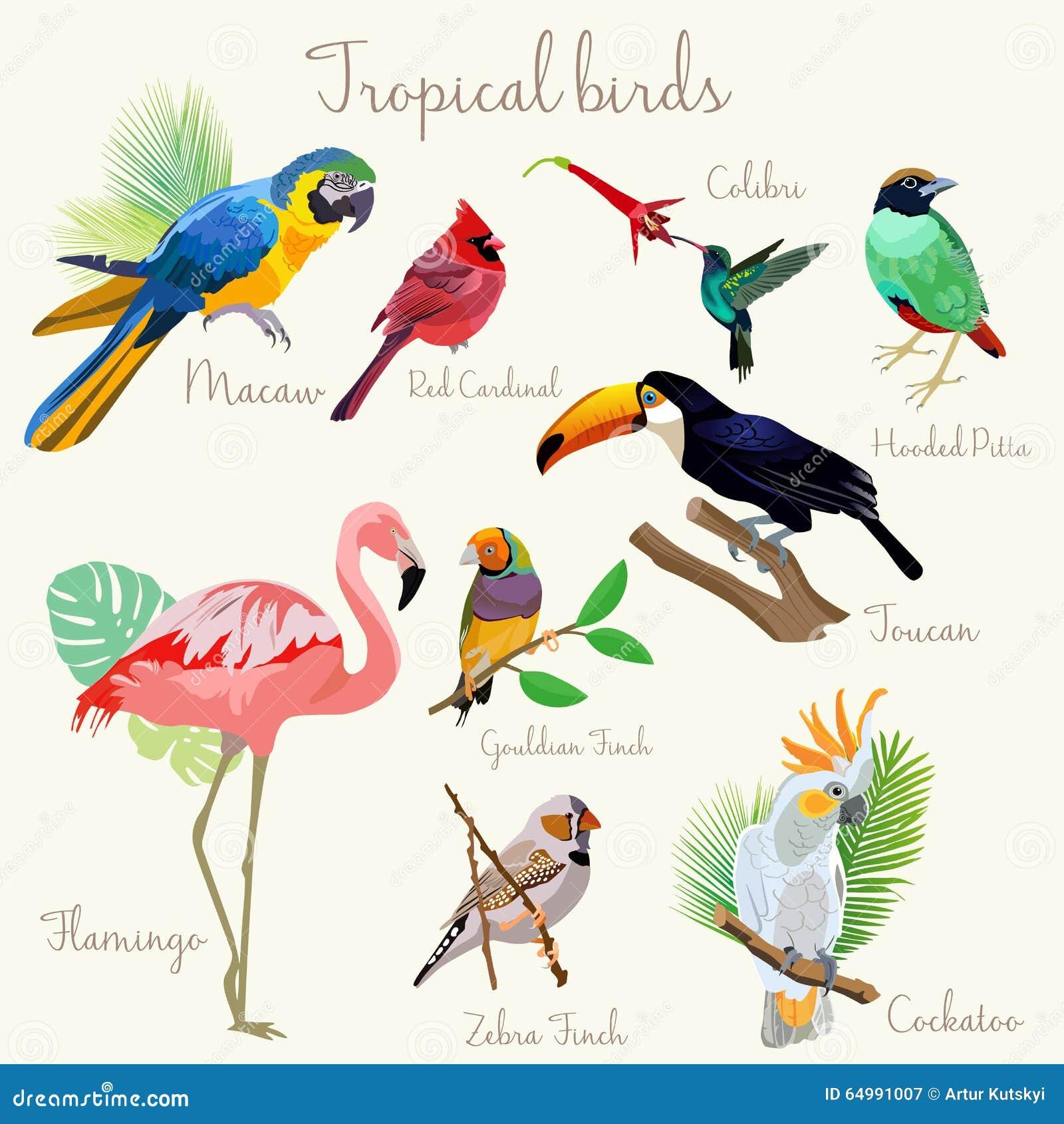 small tropical birds comp